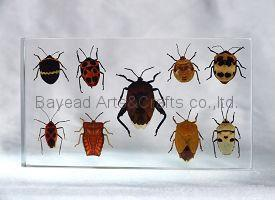 Real insect amber Desktop decoration business Gift insect resin Specimen