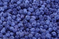 blueberry concentrate(sales25 at lgberry
