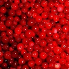 Lingonberry Red(sales25 at lgberry dot com dot cn)