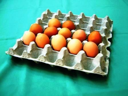 recycled paper pulp egg carton/egg tray/box/cup tray 2