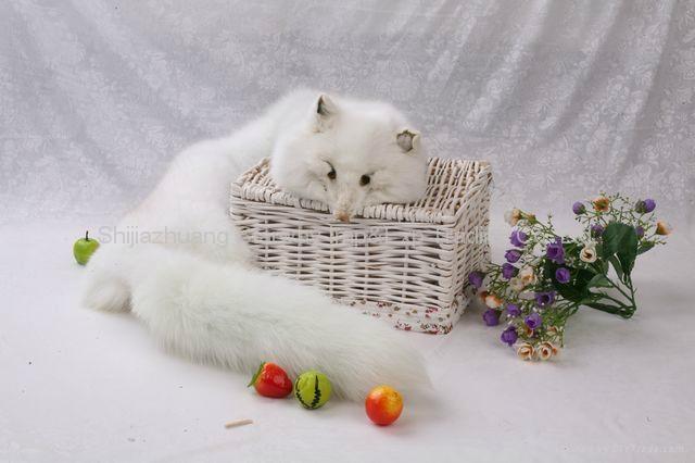 Fox Fur Scarves Fur Scarf Fox Fur Wraps Fur Shawl Fur Cape Fur Poncho 4 Colors 2