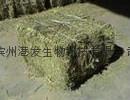 供应优质苜蓿草