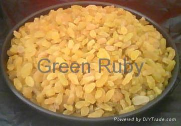 Golden raisin 1
