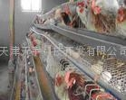 禽畜养殖消毒剂