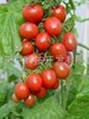 农作物蔬菜种植消毒灭菌剂