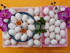 供應咸鴨蛋