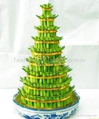 tower bamboo