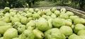 Pears 3