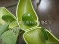 加納籽提取物99%5- 羥基色