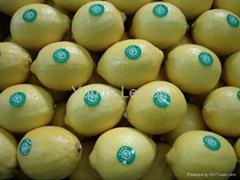 Fresh Lomon