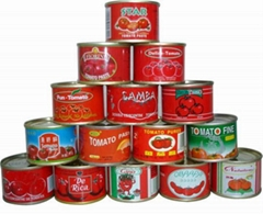 canned tomato paste 70G*100tins on hot sale