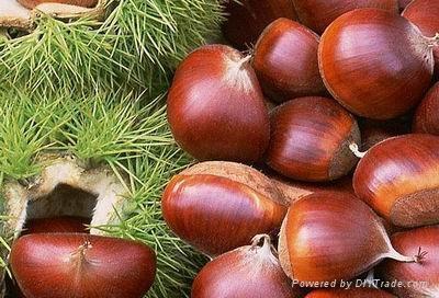chestnut,red kidney beans,green mung beans 1