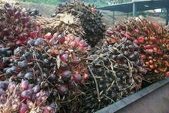 Degume ,Crude  and Refined  Edible Palm oil and other  Oils