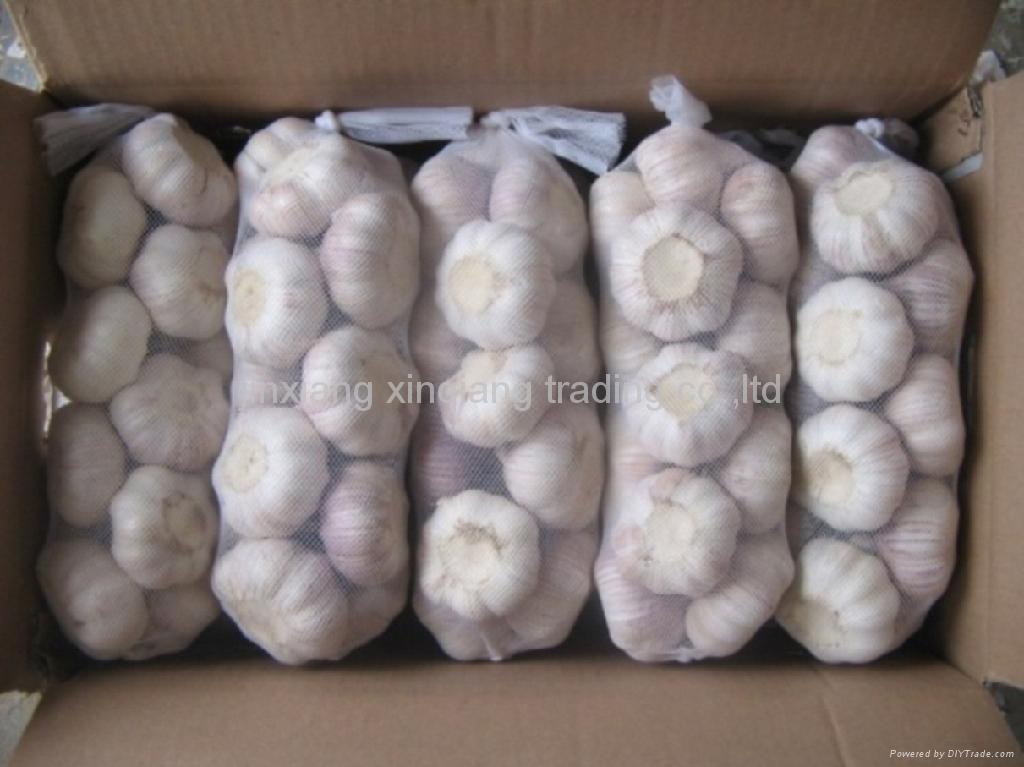 Chinese Garlic 1