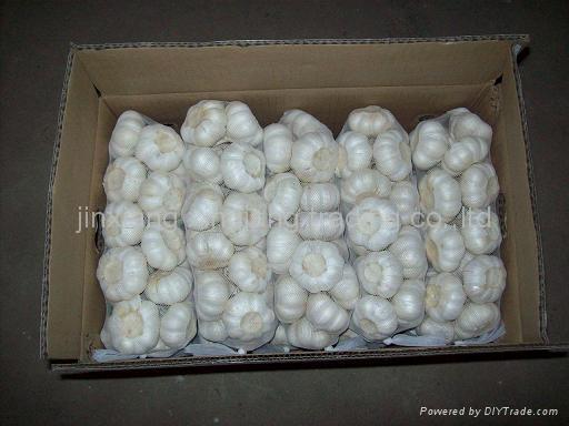 Chinese Garlic 3