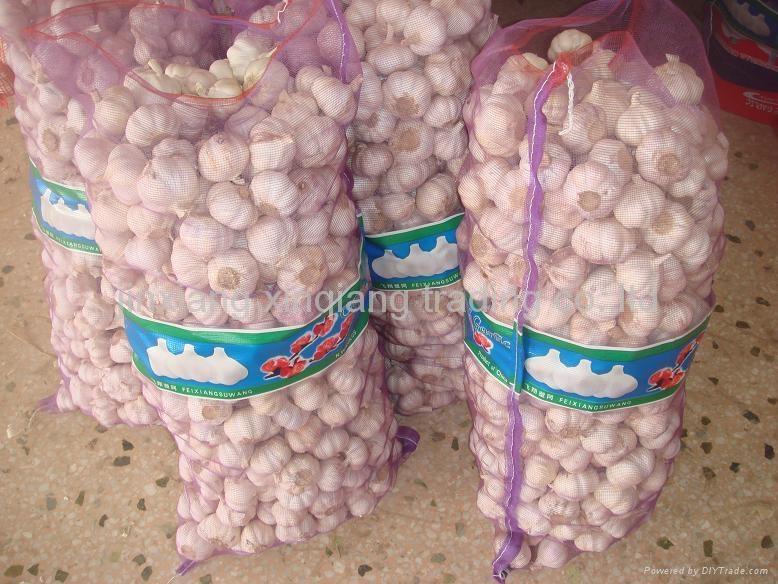 Chinese Garlic 4