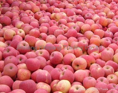 Fresh Apple 1