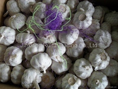 Chinese Fresh Garlic,Garlic,White Garlic,Fresh Garlic,Regular Garlic