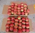 Fresh Apple 3