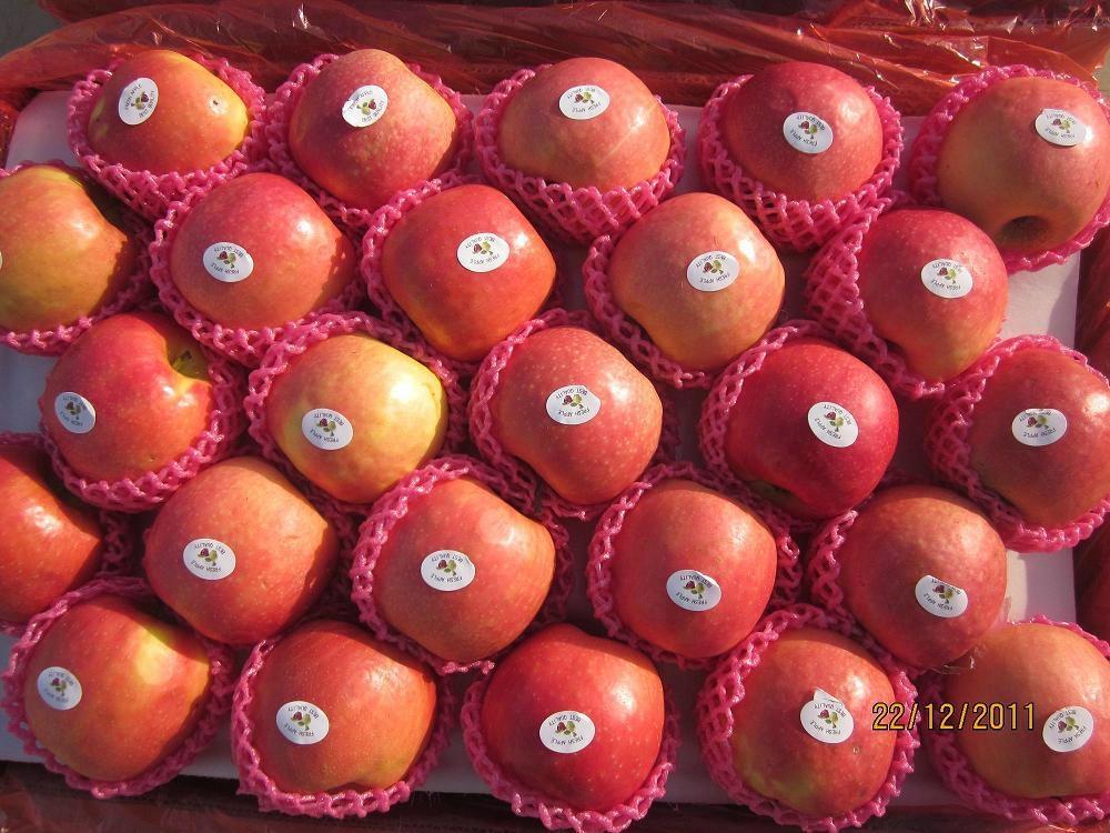 Fresh Apple 4