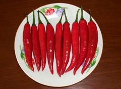 保鮮紅辣椒