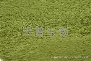 Instant Green Tea Powder 1