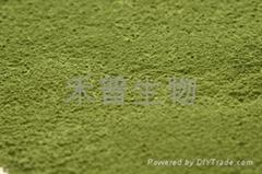 速溶綠茶粉