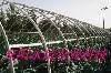 鋼塑復膜溫室大棚骨架機 2
