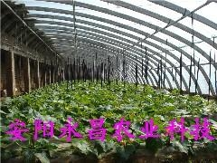 蔬菜大棚 1