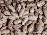 Light Speckled Kidney Beans( Long Shape)
