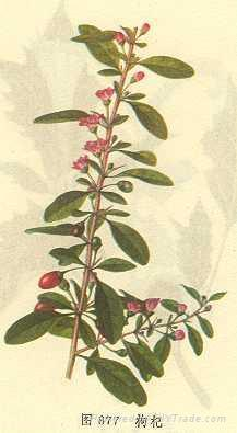 Wolfberry Extract 1