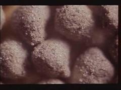 显微镜下的蚯蚓粪