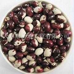 panda kidney bean