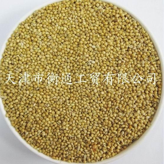 Yellow White Millet for Bird Feed
