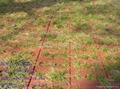燒結園林磚 2
