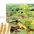 Astragalus Polysaccharides
