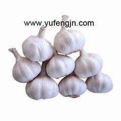garlic 2012 new crop