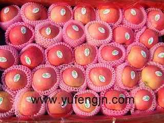 fuji apple 1