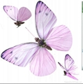 Artificial Butterfly Decoration 1