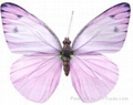 Artificial Butterfly Decoration 2