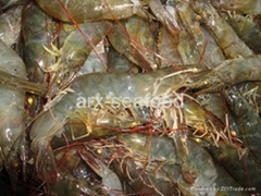 Frozen Penaeus Shrimp