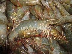 Frozen Penaeus Shrimp