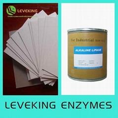 Bio-sizing enzyme
