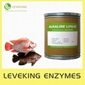 Feed enzyme 1