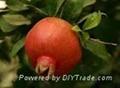 Pomegranate Extract Ellagic acid