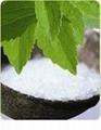 stevia leaf extract powder RA 98%