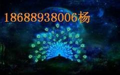 2012龍年春晚LED大屏幕精彩無限