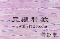显微镜切片
