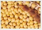 大豆低聚糖Lycoposes