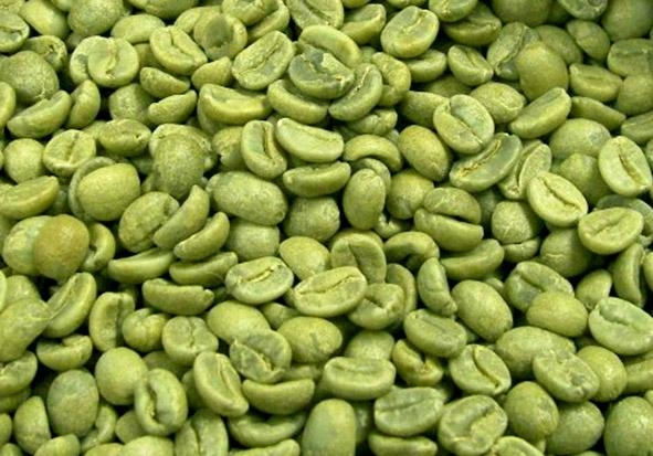 Green Coffee Bean Extract Chlorogenic acid 1